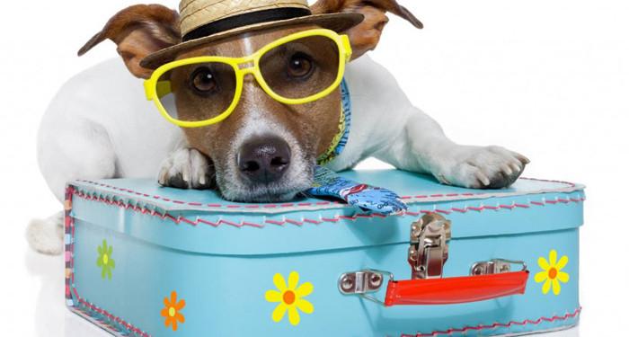 Animalmania è in Vacanza